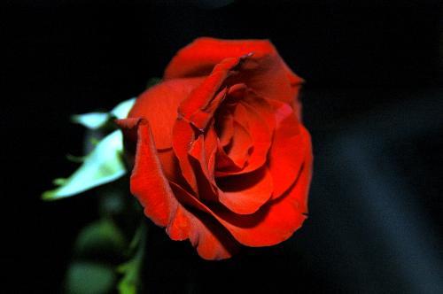 Flower flower represent love the love life that i have for Flowers that represent love