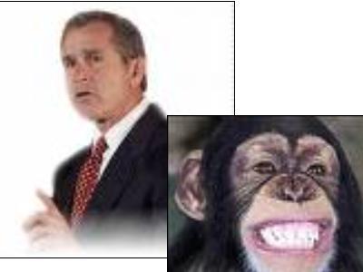 Bush Vs Monkey - Plz do me a fave..................