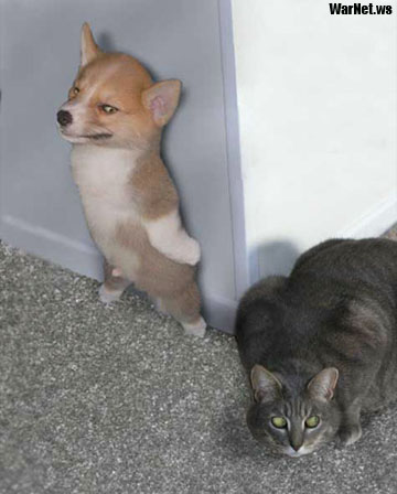 cat n dog - cat and dog spying