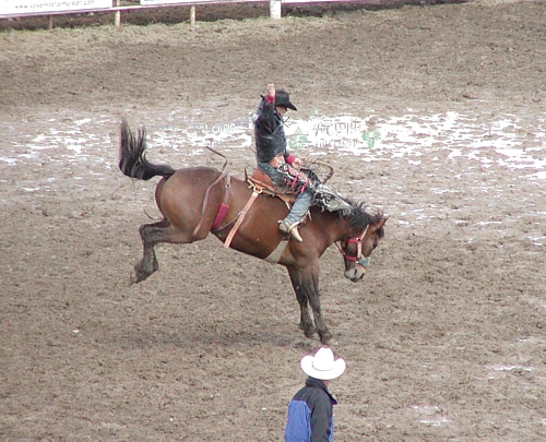 rodeo - There are huge rodeo events in the USA