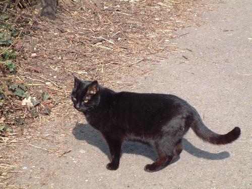 Black cat cross ur road - Black cat
