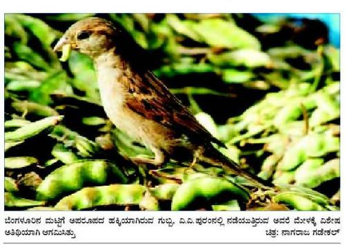 Life - See this bird sitting on a pile of food !!!!!!!!