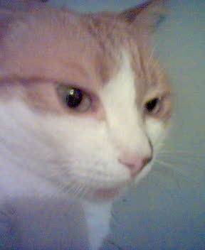 My cat. - This is my cat. The picture is taken with my mom's old mobile phone. That's why it's not very clear. But you can see how beautiful he is, right?:)