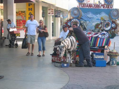 """strangers walking on the Avenida de Revolucion in  - these folks just happened to be passing by, I was shooting the painted mule rather than the passerby. The little men with their exotic looking """"zebras"""" are on every corner it seems trying to sell tourist photos of them posing with the ersatz zebra so snapping your own photo will get them twirked and bent out of shape! It's hilarious!"""