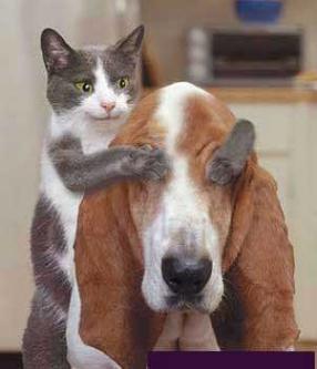 Cats vs Dogs - Comparison