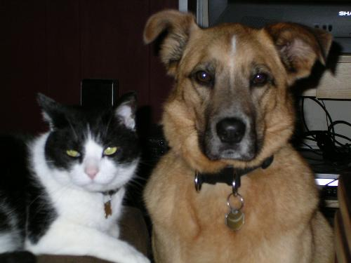cat and dog - meer toleration? or BFF's? - Mostly, my cat and dog tolerate eachother pretty well.