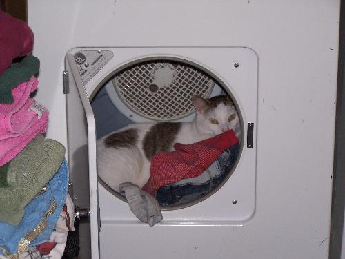 Cat in dryer - Our cat in the dryer after drying clothes.