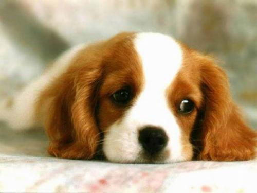 Puppy! - OMG! It's a cute little puppy dog!