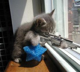 sniper cat - sniper in the window