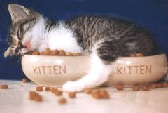 kitty - this is the cutest kitty ever!!!
