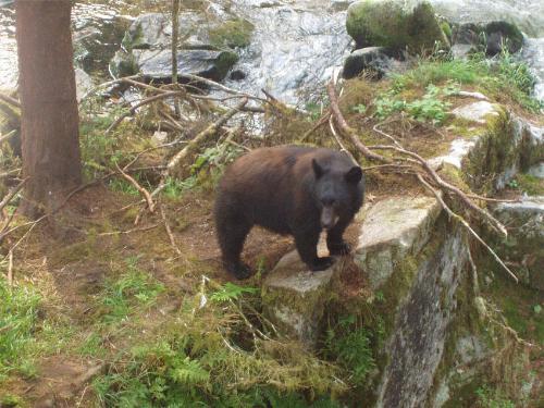 little bear - a little bear in the forest