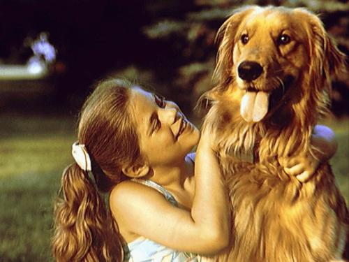 Kids love pets - Girl with golden retriever dog