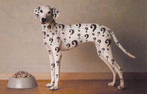 dog food - dog with dog food