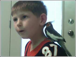 bird - My son with one of our cockatiels