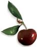 Cherry - One red Cherry