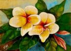 Plumeria - Plumeria comes in many different shades, this is just one of many.