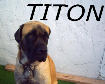 Titon - This is my dog.