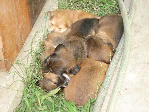 Puppies - The princess puppies. Six of them their names are: Boby, Grimm, Luna, Dulap, Sarah and Bodhy.