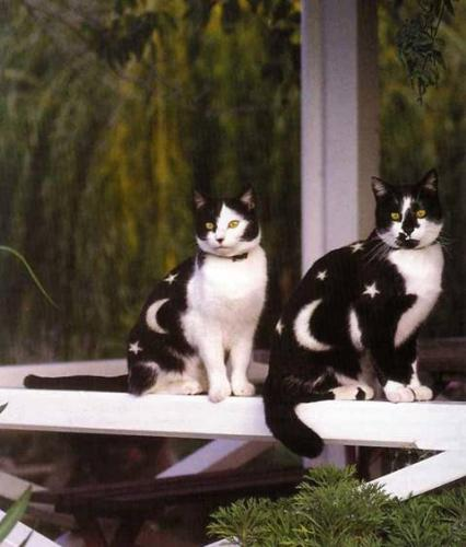 painted cats - picture of two cats painted