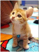 little Nekoo  - It looks like little Neko