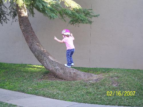 Climbing a tree - My 3yr old trying to climb a tree after taking a break from ridig her bike
