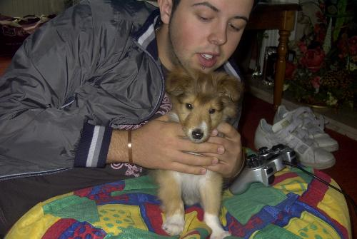 Turu and Phoebe (Nephew and Dog) - This is my Rough Collie, Phoebe, when she was only 10 weeks old. So cute.