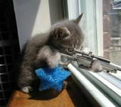 MYLOT SNIPER - CAT