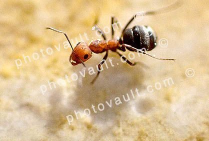Three ants - Pic of ant on the ground