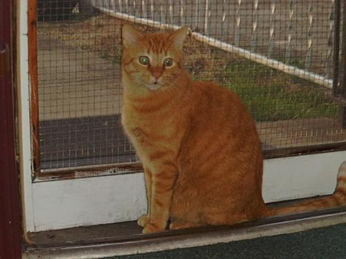 Hunter 1989-1999 - orange cat