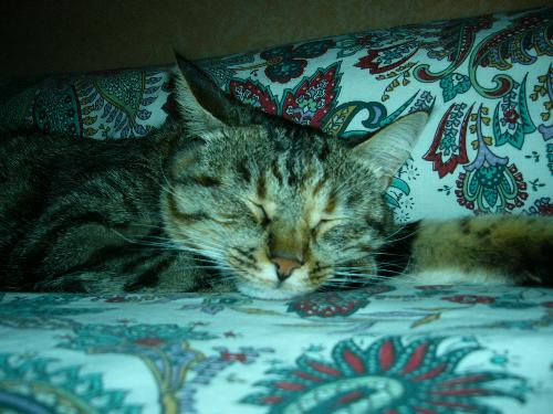 this is my wonderful cat - isn't she lovely???
