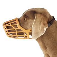 muzzle - muzzle for dog photo