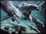 Dolphins - Are dolphins really intelligent?