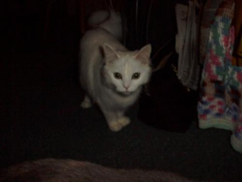 Another of Sassy - white cat