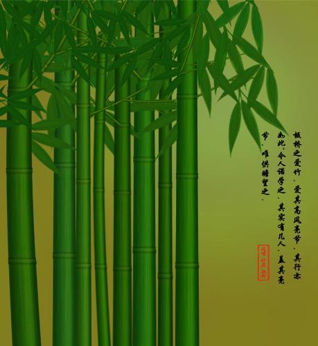 Bamboo - wander land of bamboo