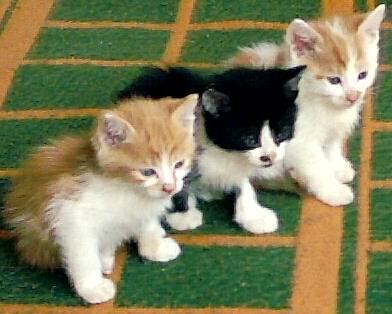 cats - little cats