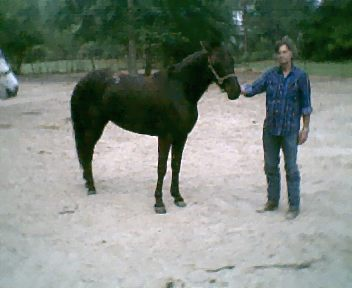 Baby - This is Baby, my registered Tennessee Walker Mare. She is almost 5 now.