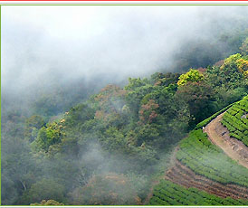 Munnar - A lovely hill station in Kerala