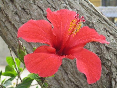 Flower - Beautiful flower