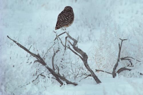 Realxing - Unknown Hawk
