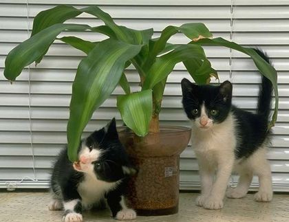 cat - plant eating cats