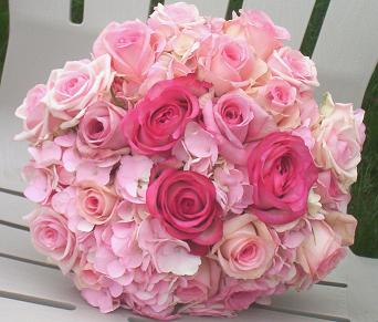 Roses are pink - pink roses.