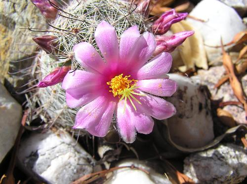 Cactus - Photo from webshot.com