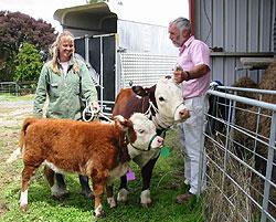 Hereford mini cow - so cute!!