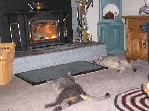 Minky & Mattie by the warm fire! - This is the life! Nothing like warming the tummies by a toasty fire!