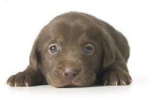 Puppy - A black puppy.