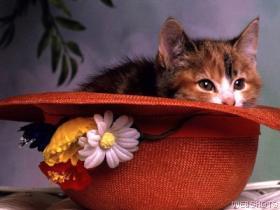 Shweeeeetest ..... - Sweet Picture
