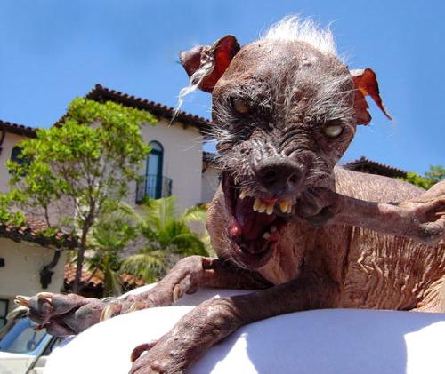 ugly dog sam. Sam- the ugliest dog 2005