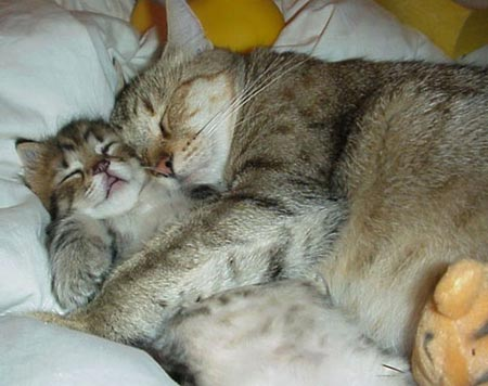 Two sleeping cat - they are so funny
