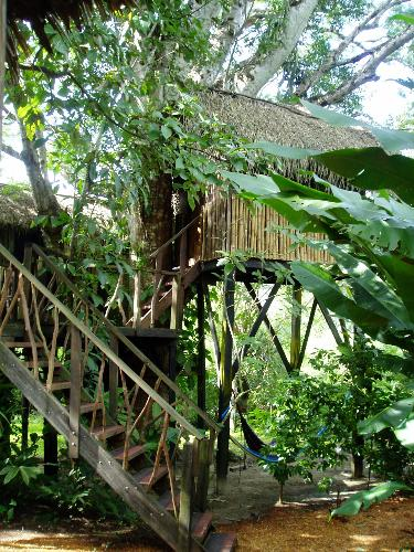 A treehouse  - This is a thatched tree house in Belize.