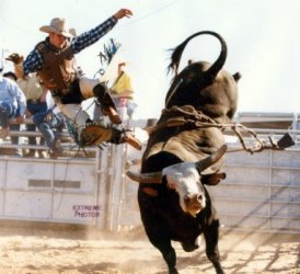 PBR Tour - rodeo rider gets bucked off